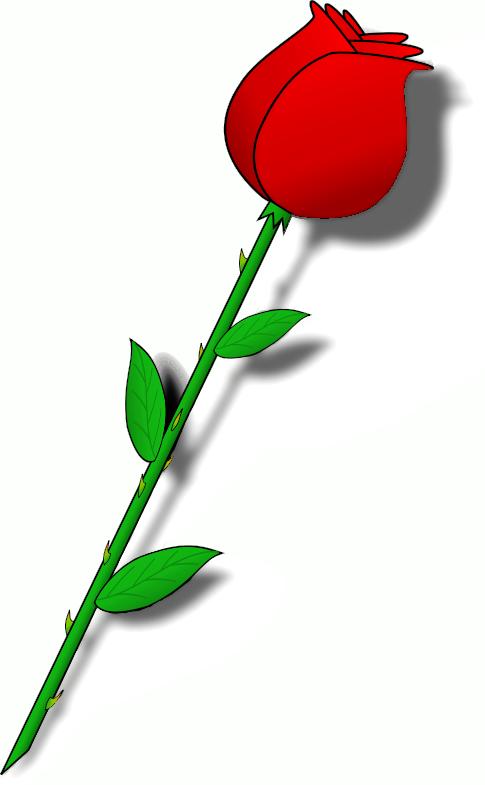 485x785 Long Stem Rose Clipart