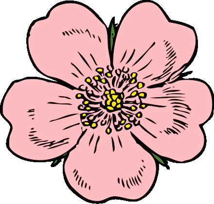 440x420 Rose Flower Clip Art 7203206
