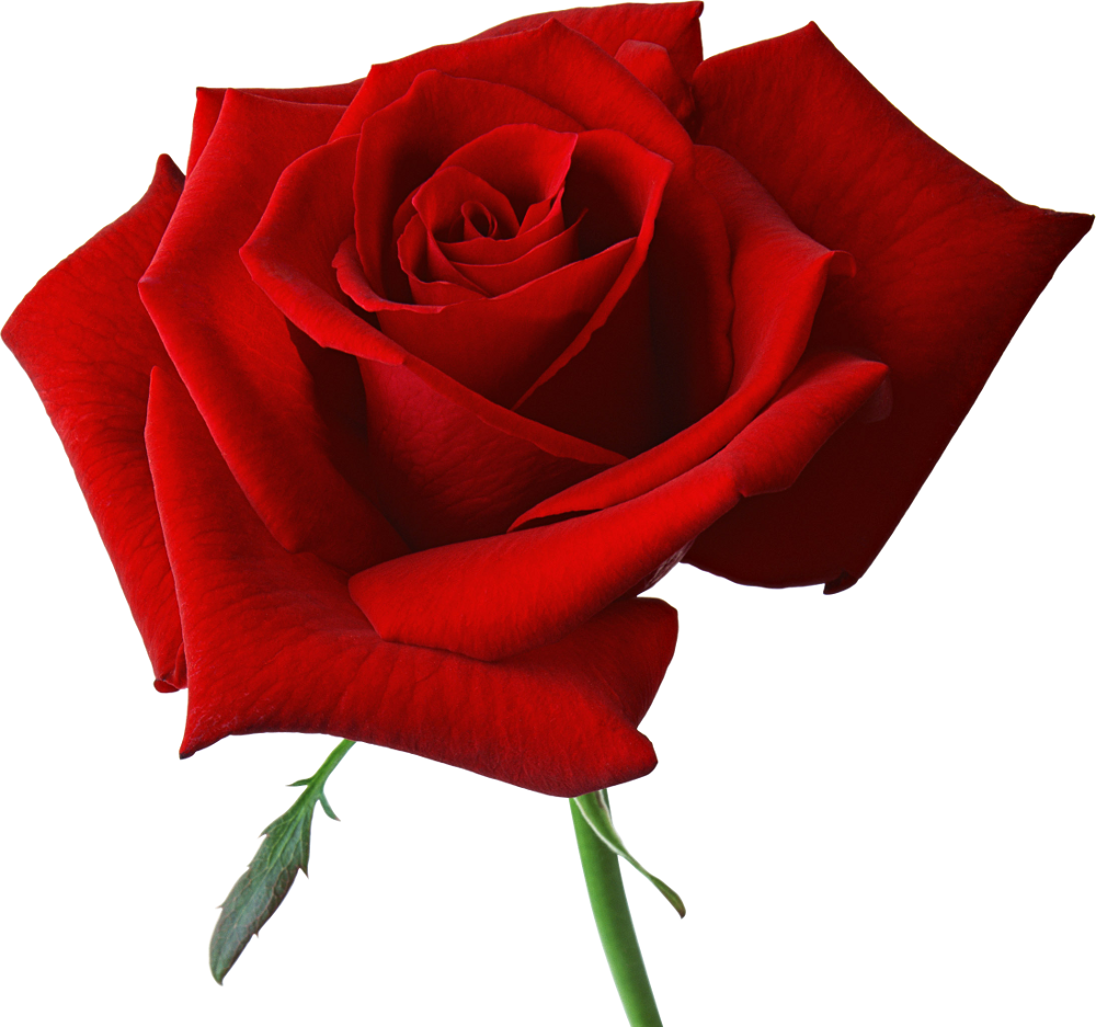 1000x937 Beautiful Clipart Red Rose