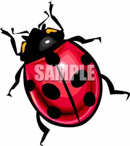 267x300 Clip Art Image Overhead View Of A Ladybug