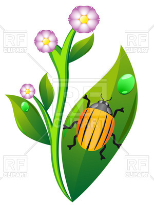 300x400 Colorado Beetle On Leaf Of Potato Plant Royalty Free Vector Clip