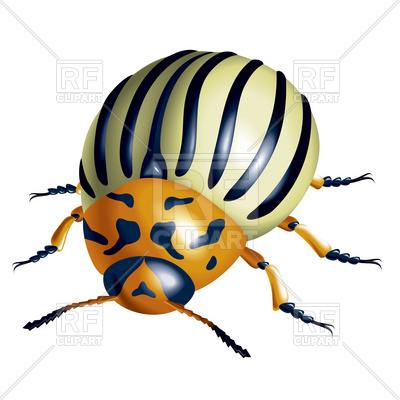 400x400 Colorado Potato Beetle Royalty Free Vector Clip Art Image