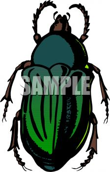 224x350 Dark Green Flower Beetle Clipart