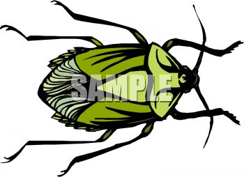 350x254 Green Shelled Flower Beetle Clip Art