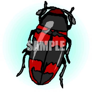 350x350 Red And Black Beetle Clip Art