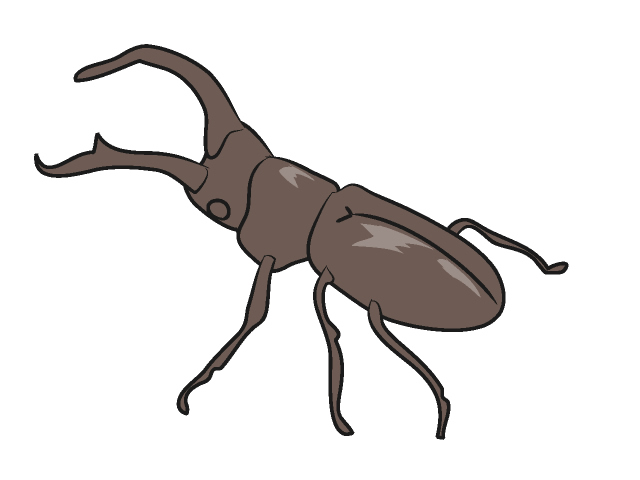 640x480 Stag Beetle Insect Animals Clip Art Free Illustrations