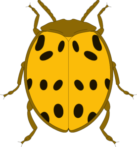 277x297 Yellow And Black Spotted Beetle Clip Art