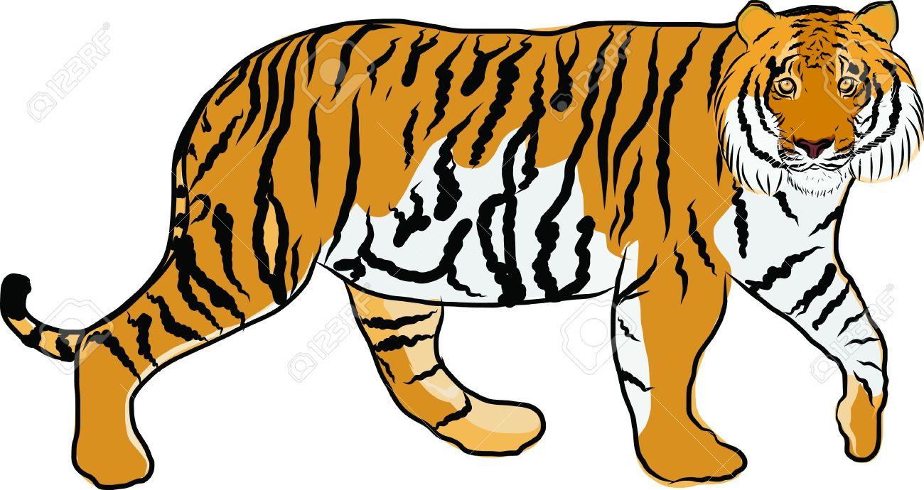 1300x690 Animal Clipart Tiger