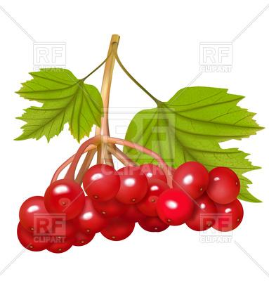383x400 Red Viburnum Berries Royalty Free Vector Clip Art Image