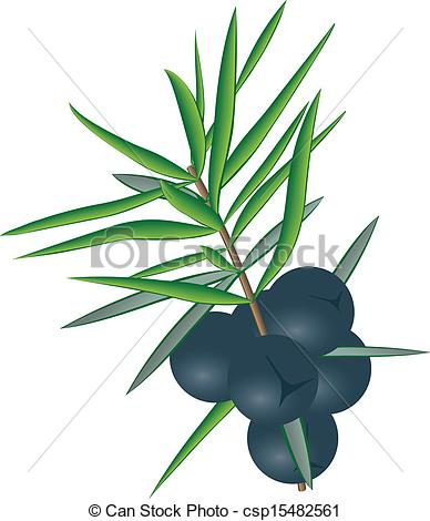 388x470 Berries Of Juniper With Some Leaves Clip Art Vector