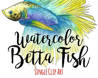 340x270 Watercolor Betta Fish Clip Art Commercial Use Siamese