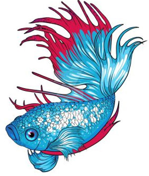 300x356 Adorable Unisex Names For Your Betta Fish Fish Care