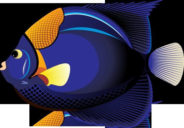 645x450 Best Blue Fish Clipart