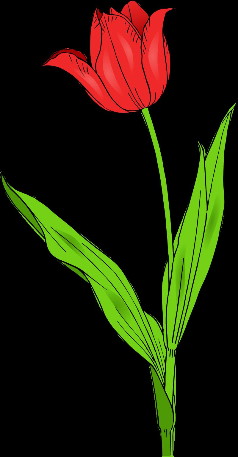 800x1534 Flower Clip Art Image Black