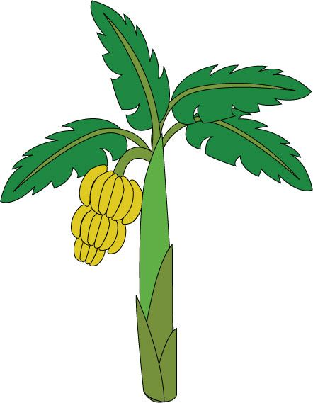 442x569 130 Best Tree Images On Clip Art, Illustrators And Banana