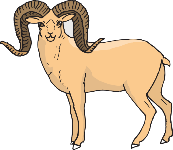 600x522 Staring Bighorn Sheep Clip Art