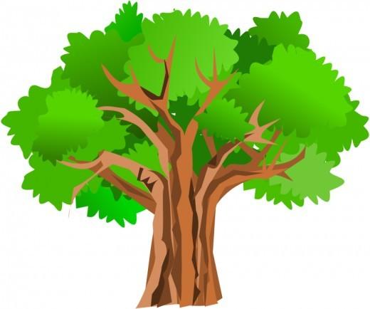 520x434 Clipart Free Oak Tree