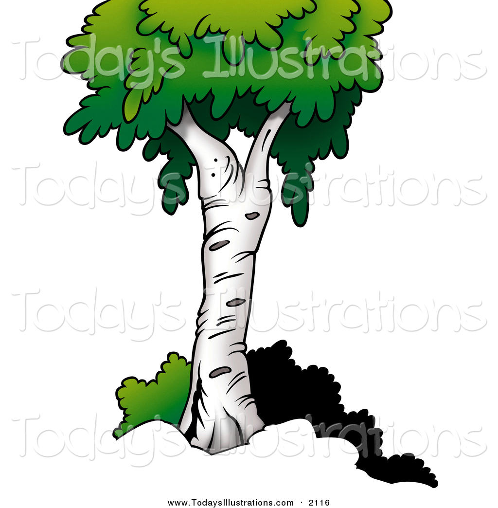 1024x1044 Clipart Of A Birch Tree By Dero