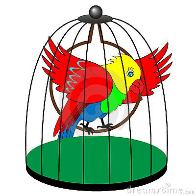 400x400 Talking Parrot 2 (Humor) Stories From All Around The World!