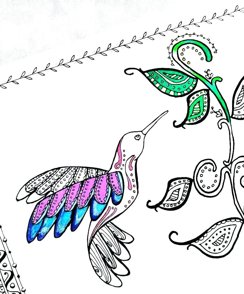 800x963 Hummingbird Coloring Pages Hummingbird Coloring Pictures