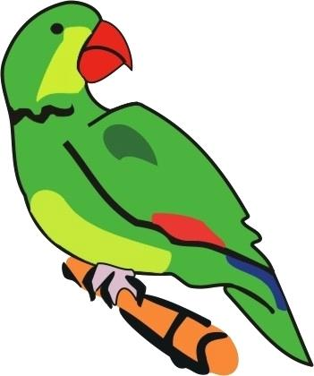 351x420 Parrot Pictures To Color Kcentar Coloring