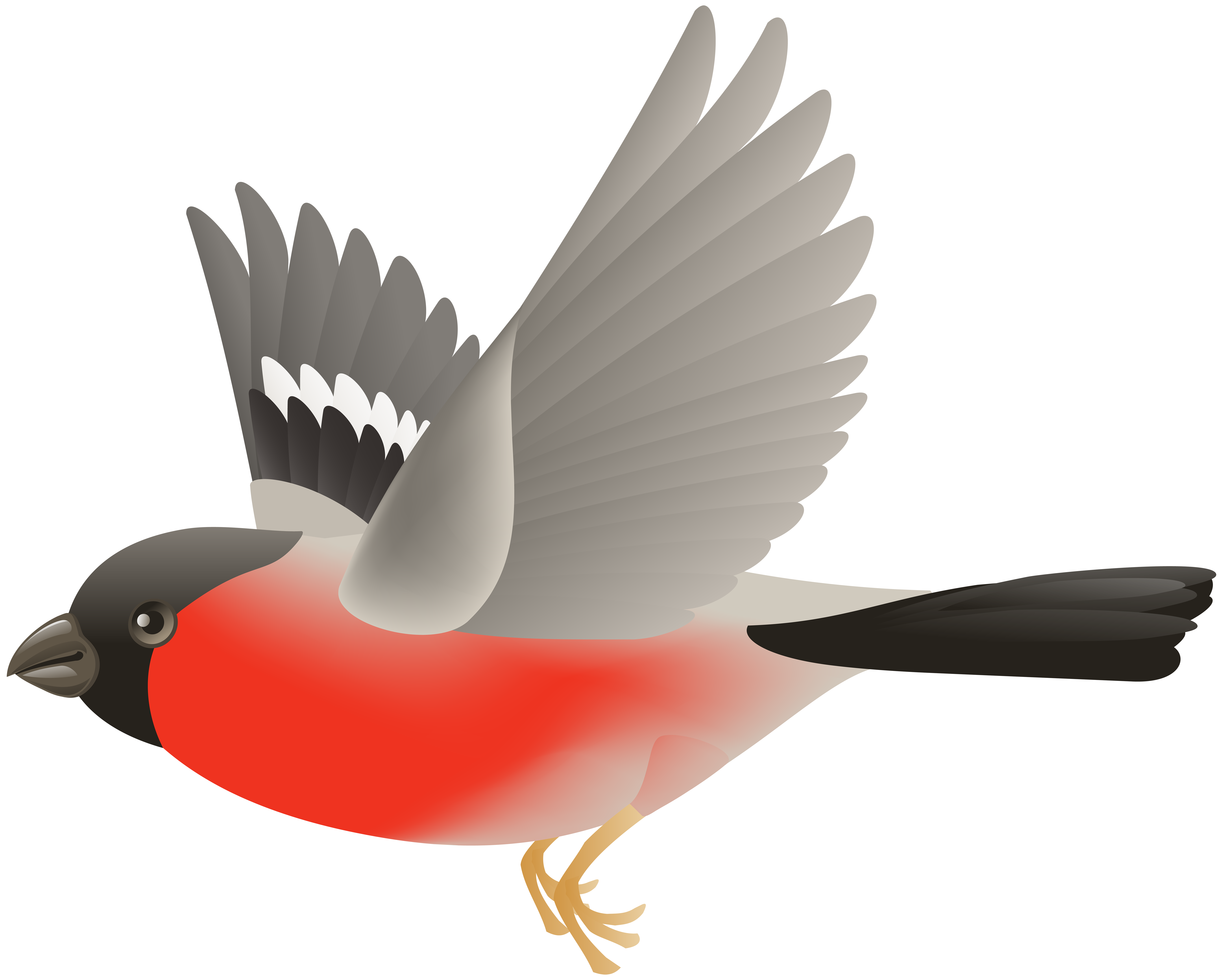 bird clipart flying cage cliparts getdrawings