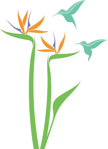 354x487 Bird Of Paradise And Hummingbird Premium Clipart