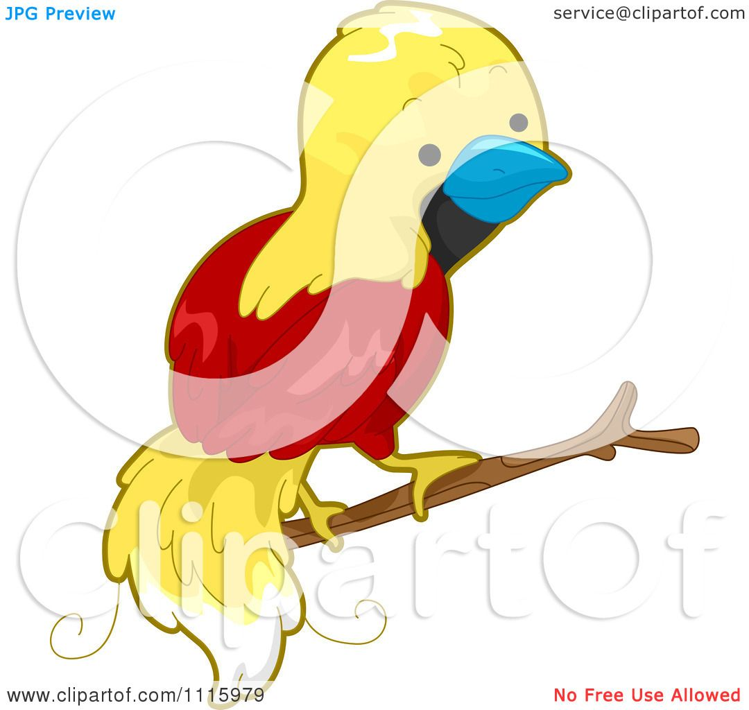 1080x1024 Clipart Cute Bird Of Paradise On A Branch