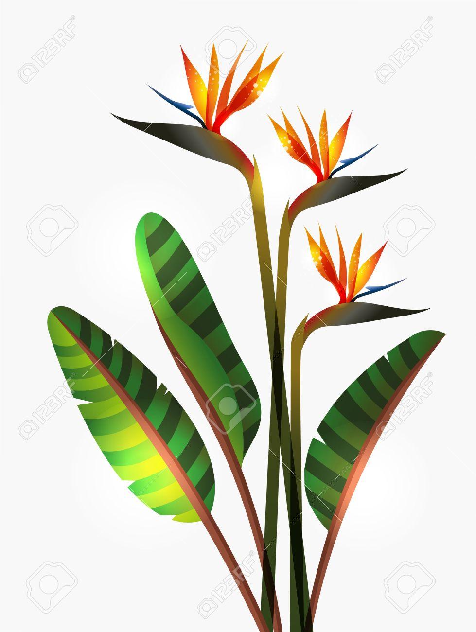 979x1300 Bird Of Paradise Flower Clip Art
