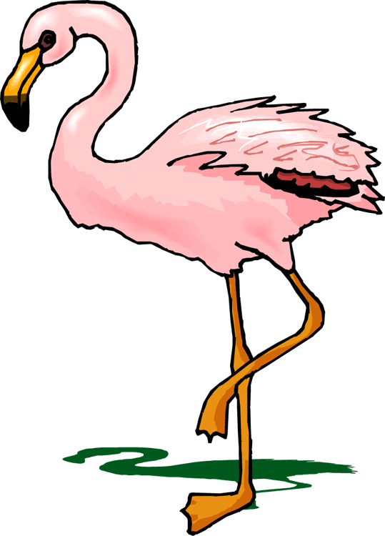 539x750 Top 84 Flamingo Clipart