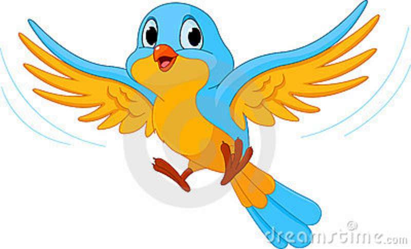 800x484 Bird Fly Clipart