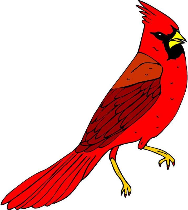 714x800 Bird Clipart Cardinal