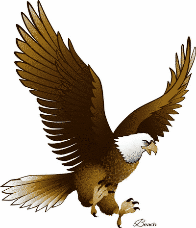 400x465 Different Types Of Eagles With Pictures Eagle, Panda And Bird