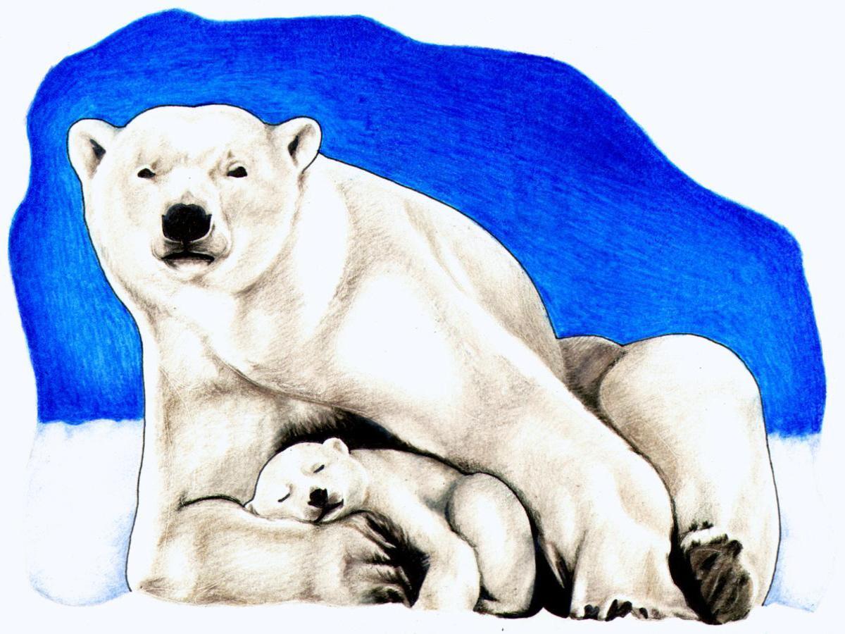 1200x900 Free Polar Bear Clipart Bear Black And White Polar Bear Clip Art