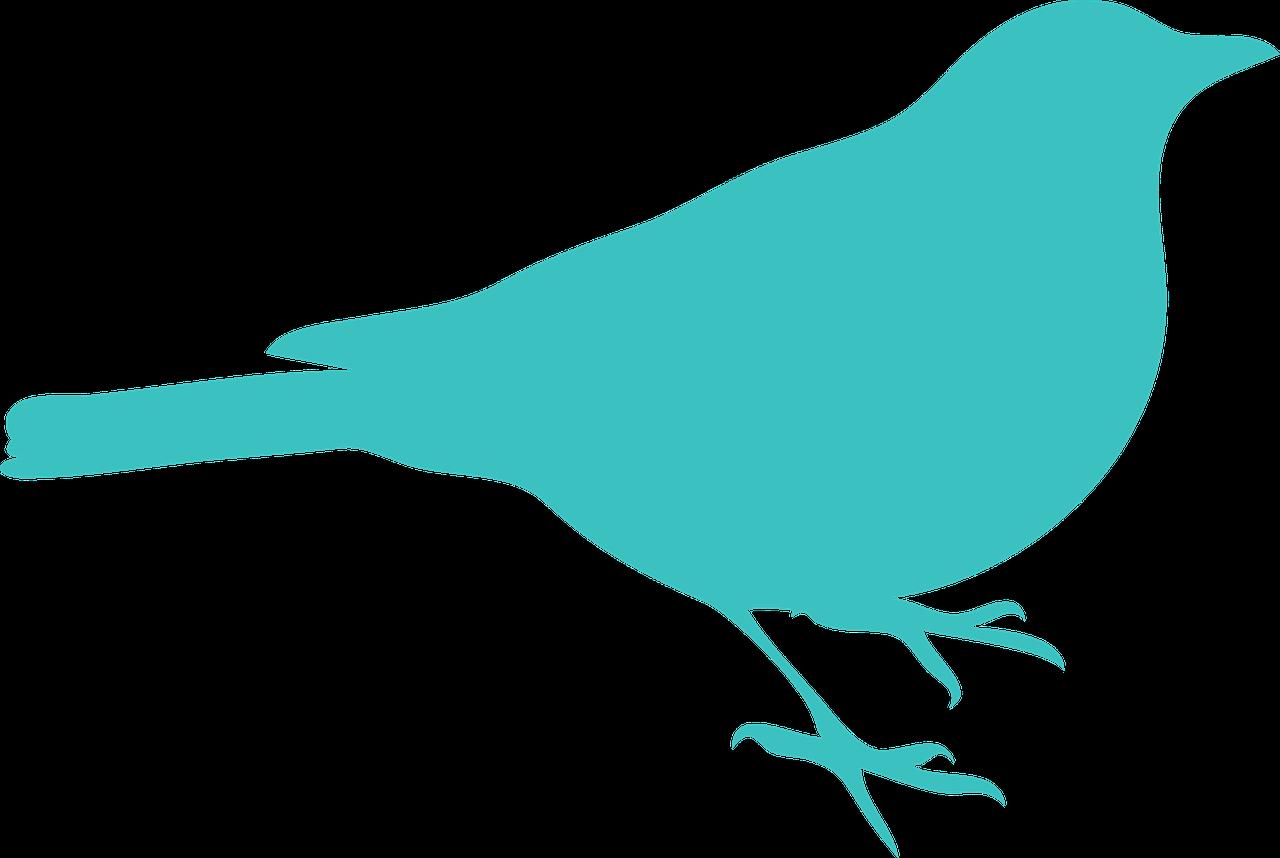 1280x858 Blackbird Bird Sit Silhouette Transparent Image Bird