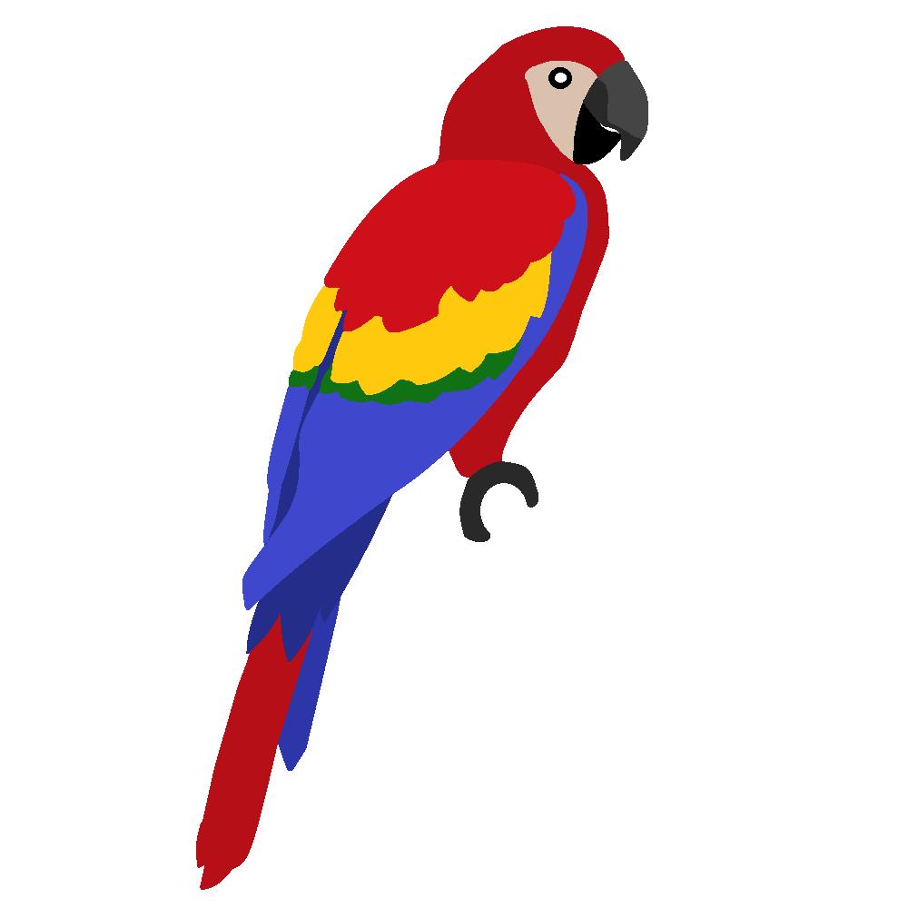 1000x1000 Best Parrot Clipart