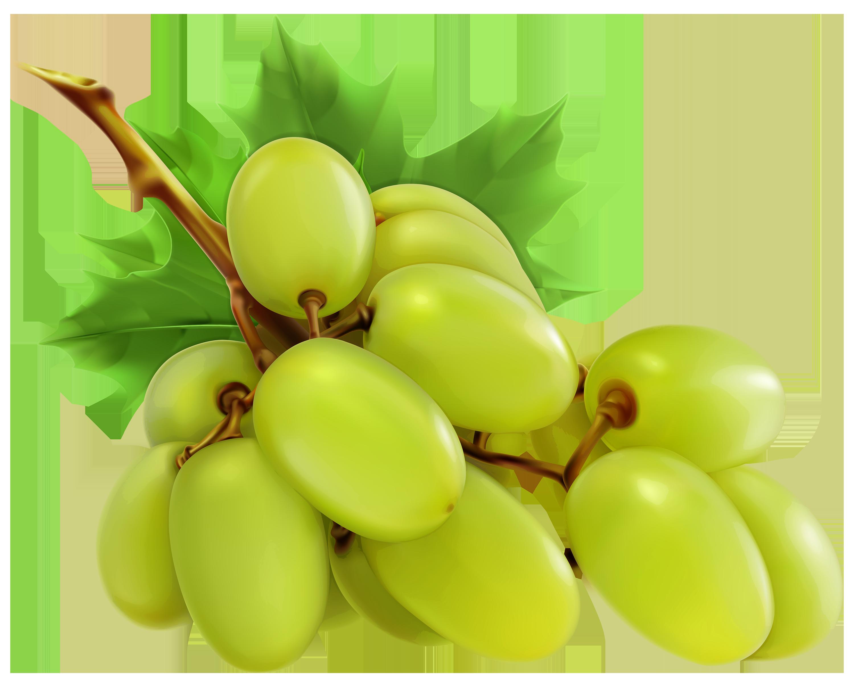 3000x2393 Top 69 Grape Clip Art