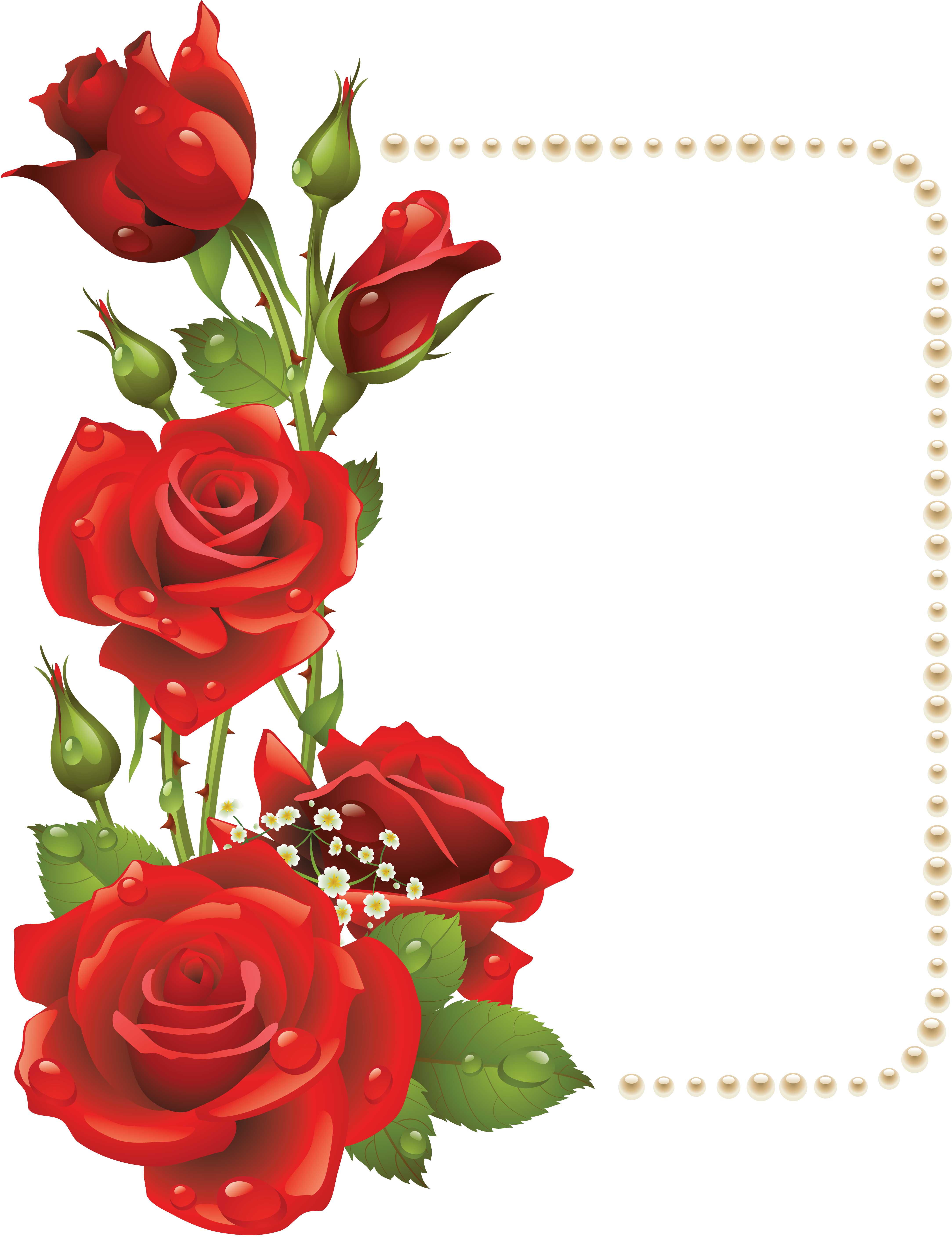 4334x5629 Large Transparent Frame With Red Roses And Pearlsu200b Gallery