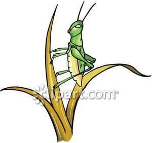 300x282 A Locust Or Grasshopper On A Blade Of Grass