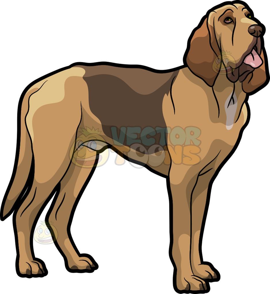 939x1024 A Bloodhound Pet Dog Cartoon Clipart Vector Toons
