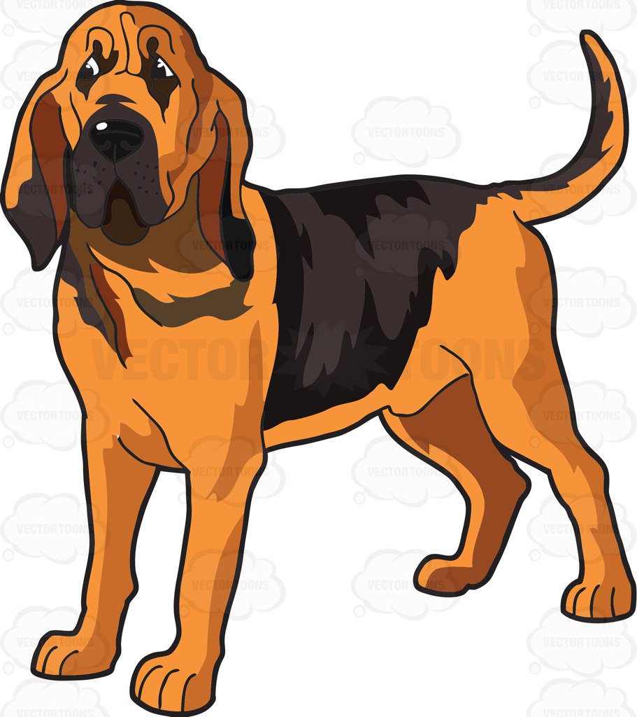 911x1024 Bloodhound Cliparts Free Download Clip Art
