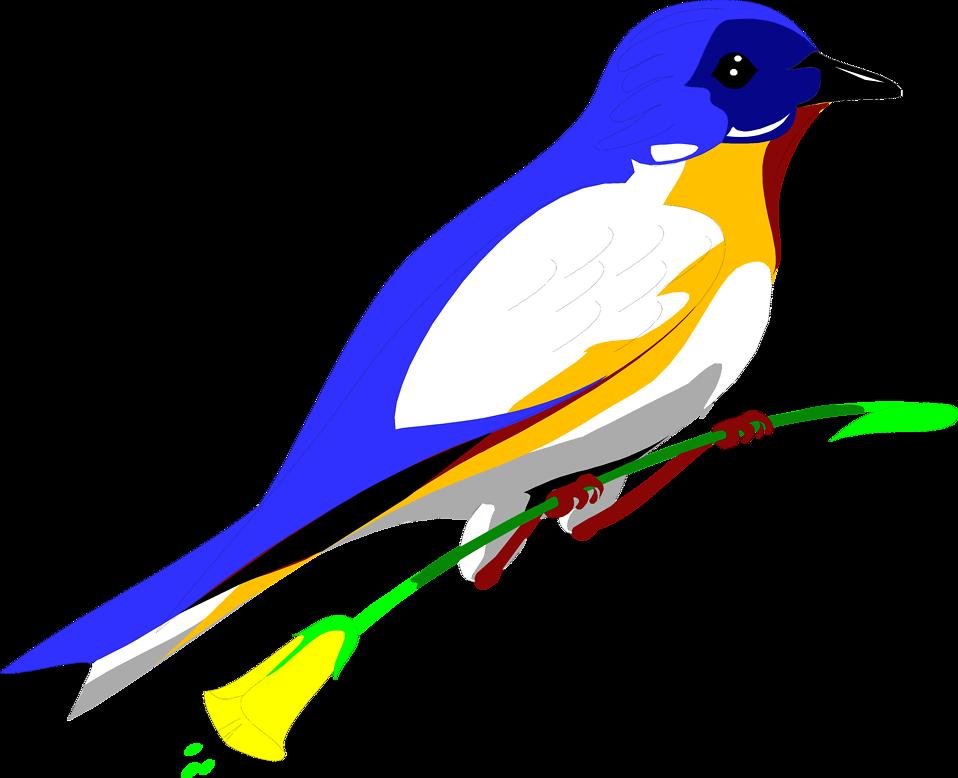 958x778 Bird Blue Free Stock Photo Illustration Of A Blue Bird Perched