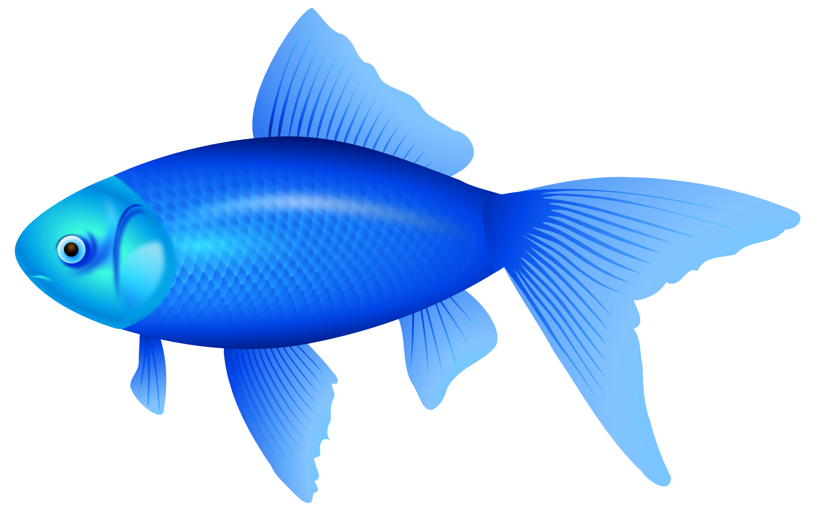 1680x1058 Blue Fish Png Clipart Image