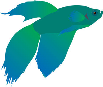 350x297 Free Clip Art Picture Of A Blue And Green Beta Fish