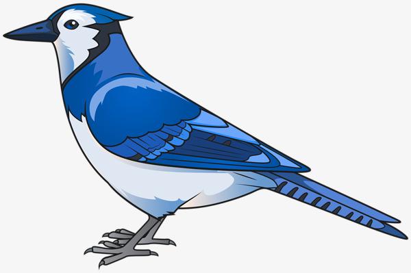 600x399 Hand Painted Blue Bird, Hand Painted, Blue, Birds Png Image