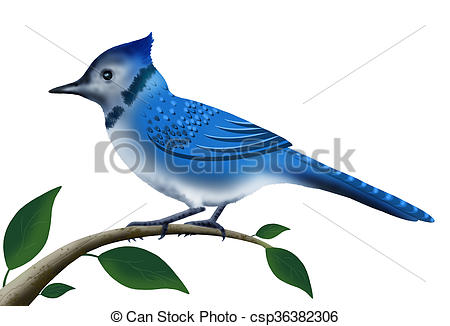 450x326 Illustration, Blue Jay Bird Perched On Tree Branch Isolated