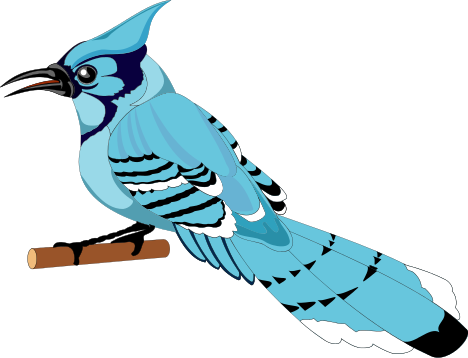 468x358 Blue Jay Cawing