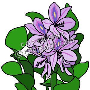 300x300 Hyacinthus Clipart
