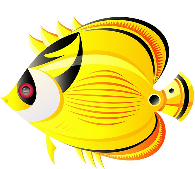 666x576 Butterflyfish Clipart Different Fish