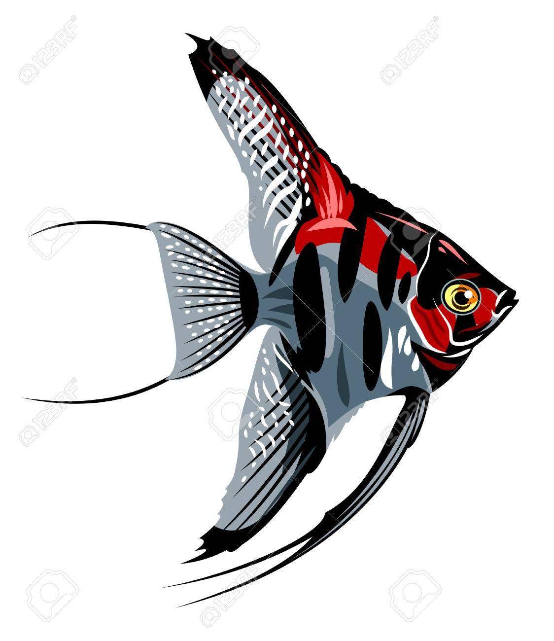 1124x1300 Tropical Fish Clipart Gills Clipart